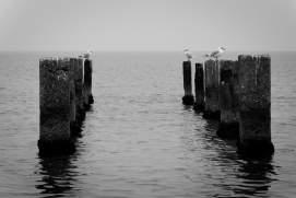 sea-and-seagulls